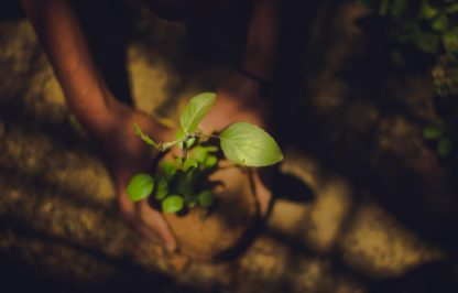 donate a tree